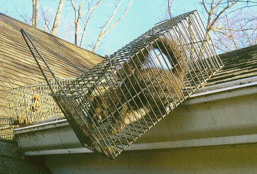 raccoon in cage on roof
